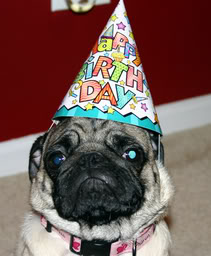 birthdaypug(2)